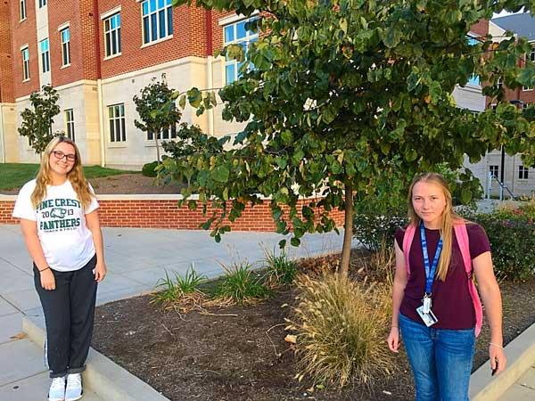 The favorite pin oak of Madison and Katie in October 2016