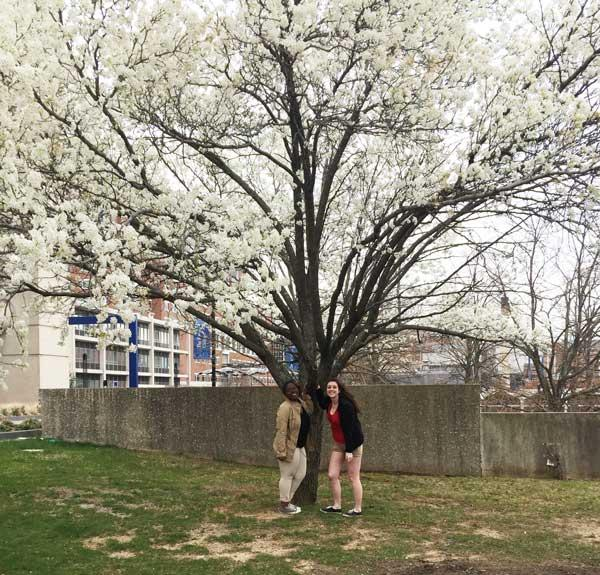The favorite Bradford pear of Maya & Rachel in March 2016