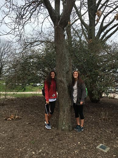 The favorite goldenrain tree of Mollie, Sierra, and Cate in March 2016