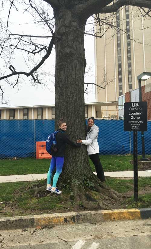 The favorite pin oak of Morgan and Paige in March 2016