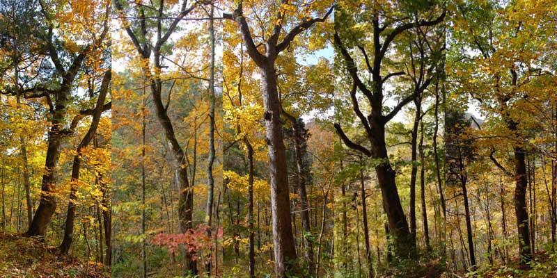 Urban Forest Initiative Tree Week Treesnap at Floracliff