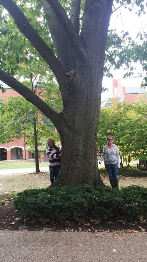 The favorite red oak of Sabrina and Kiley in October 2016