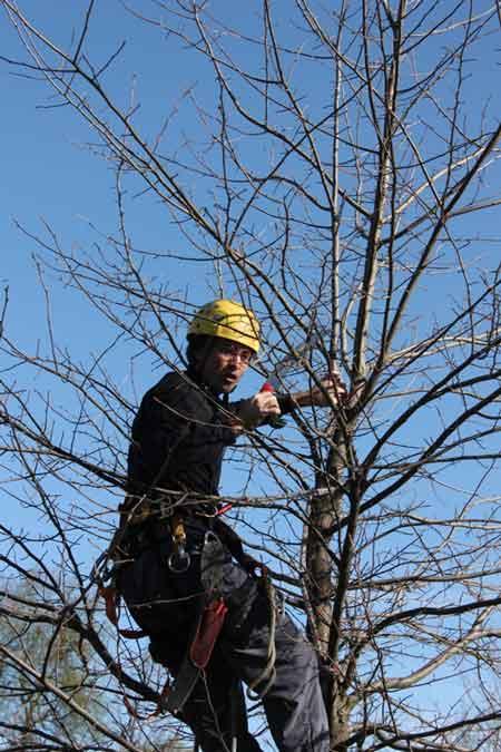 urban forest initiative tree week 2020 tree pruning