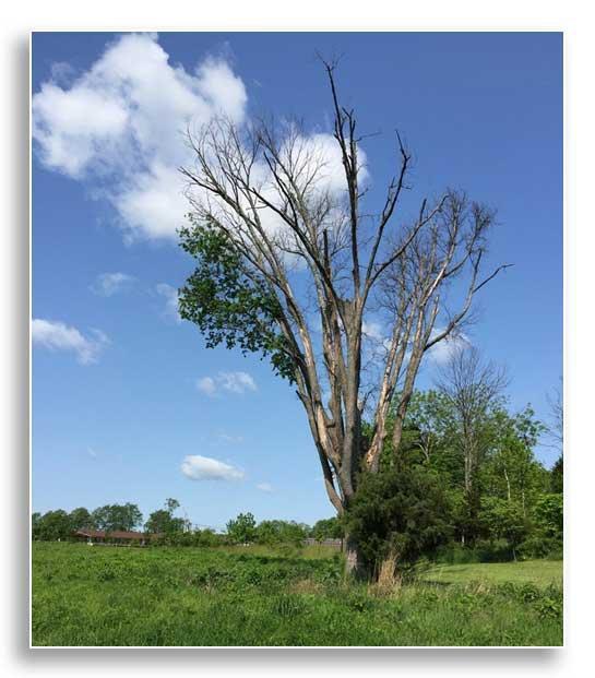 Standing dead tree providing wildlife habitat (Photo by Josie Miller)