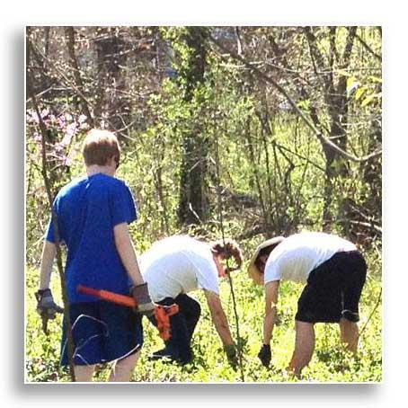 UK and BYSC students remove invasive species at UK Arboretum Woods