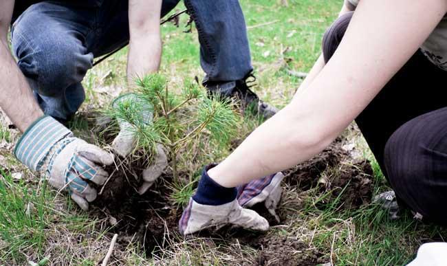 urban forest initiative tree week 2020 coldstream tree planting
