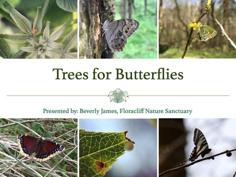 urban forest initiative tree week 2020 floracliff butterflies