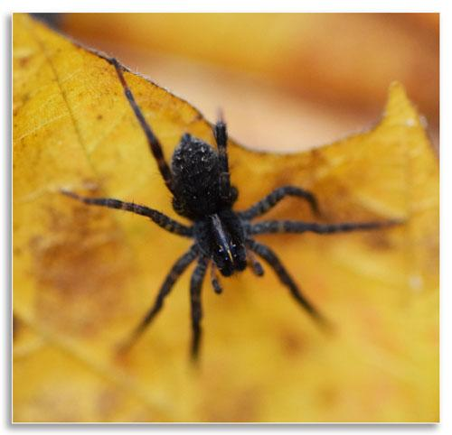 UKnTrees---5---spiders