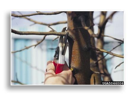 UKnTrees---branch-pruning