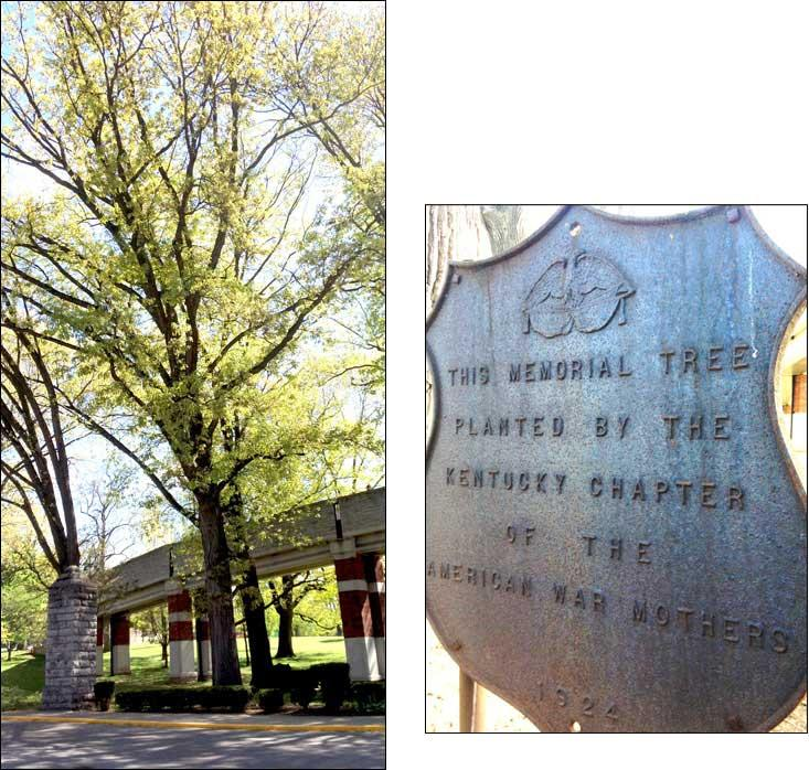 Bur oak tree and dedication plaque on University of Kentucky Campus (N. Williamson)