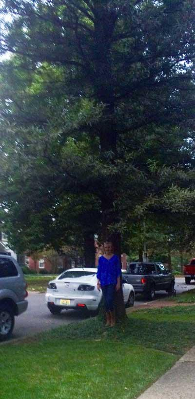 The favorite willow oak of Callie in Summer 2015