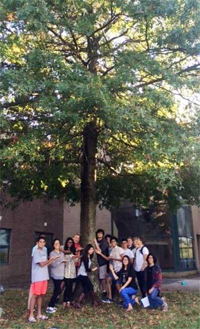 The favorite pin oak of Dunbar Environmental Awareness Troop in fall 2015