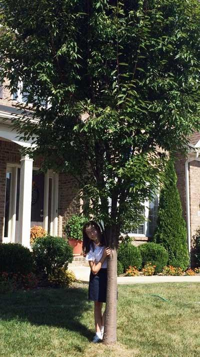 The favorite Chinese Elm of Hannah in Summer 2015