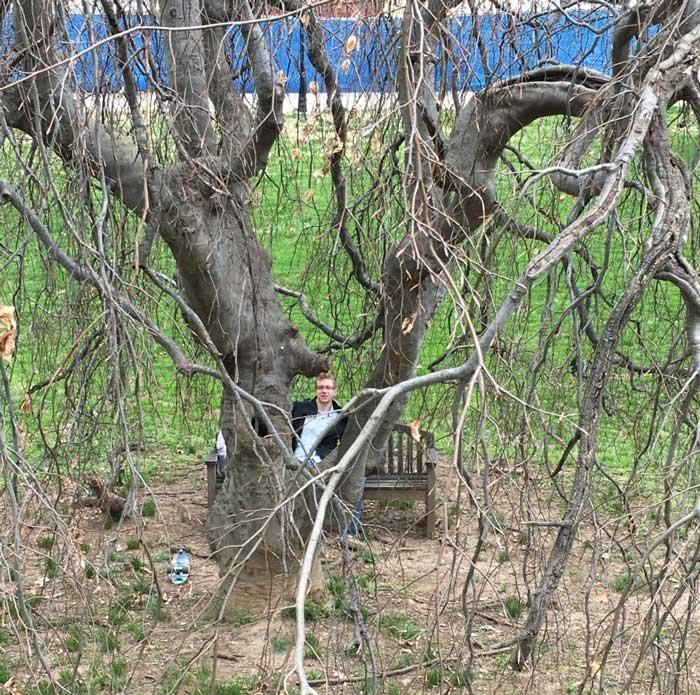 The favorite Weeping European beech of Hunter and Jason in March 2016