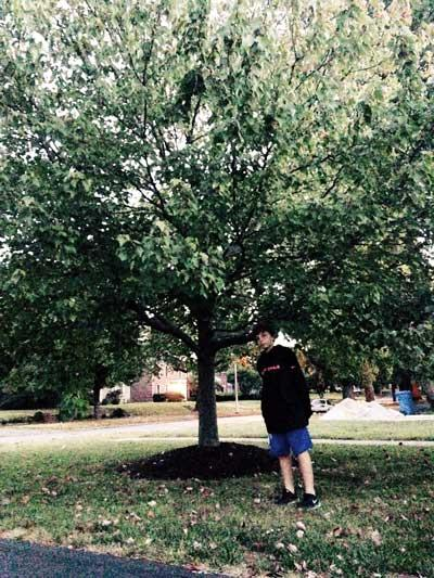 The favorite red maple of Jack in Summer 2015