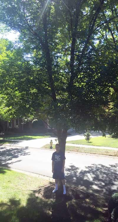 The favorite green ash of Jackson in Summer 2015