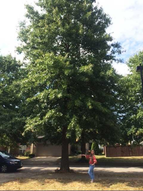The favorite pin Oak of Brianna in September 2016