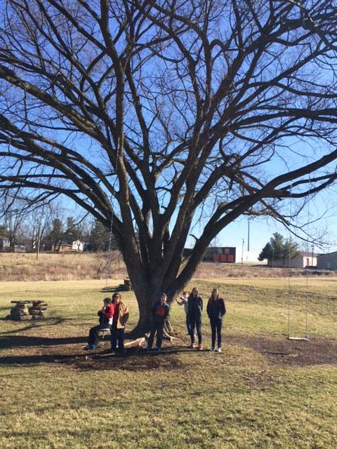 Montessouri Middle School and the American elm