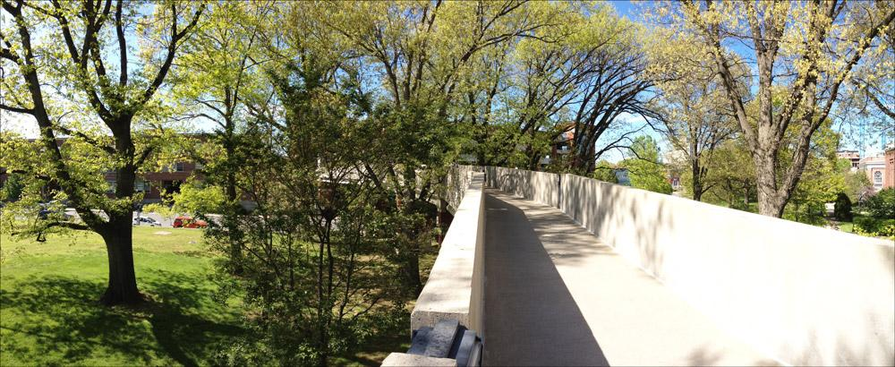 View of surrounding tree canopy; walking on pedestrian bridge over Limestone St. (April 2015)