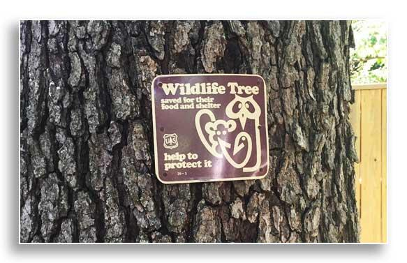Wildlife sign on tree (Photo by Josie Miller)