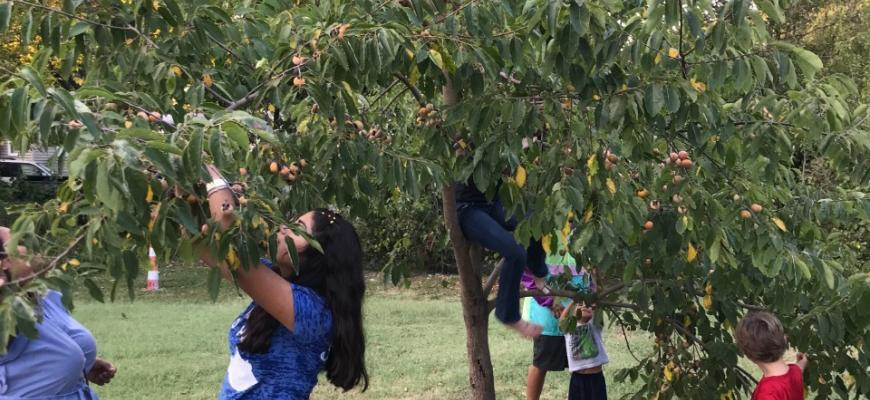 urban forest initiative tree week 2021 seedleaf fruit tree talk