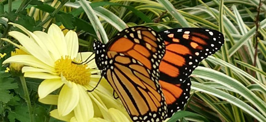 urban forest initiative tree week 2021 pollinator gardens