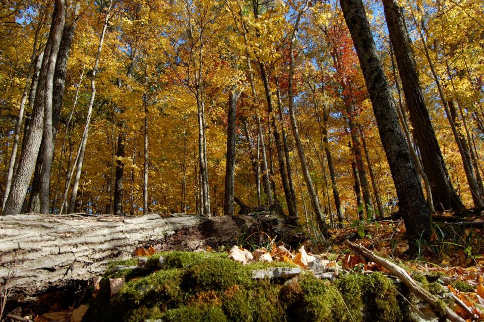 urban forest initiative tree week 2021 floracliff contemplation hike