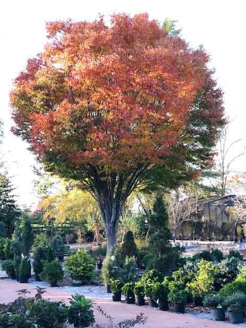 urban forest initiative tree week 2021 horsing around