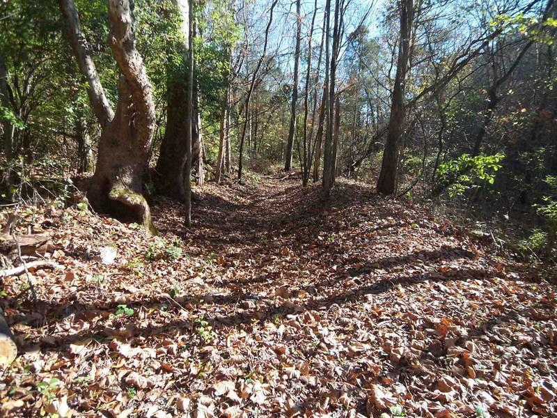 urban forest initiative tree week 2021  howard creek hike