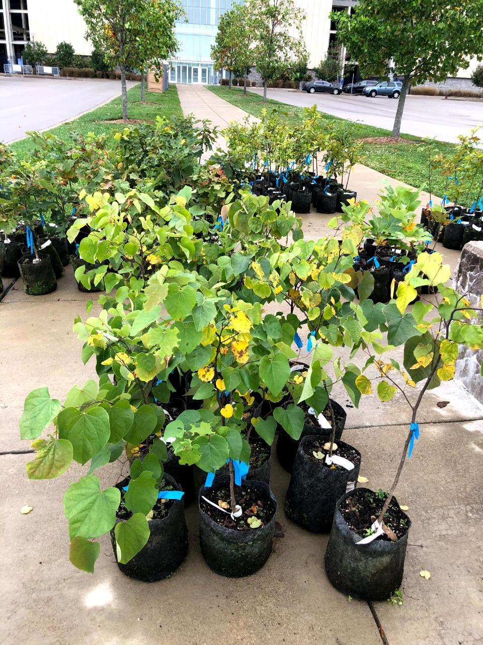 urban forest initiative tree week 2021 trees lexington tree giveaway