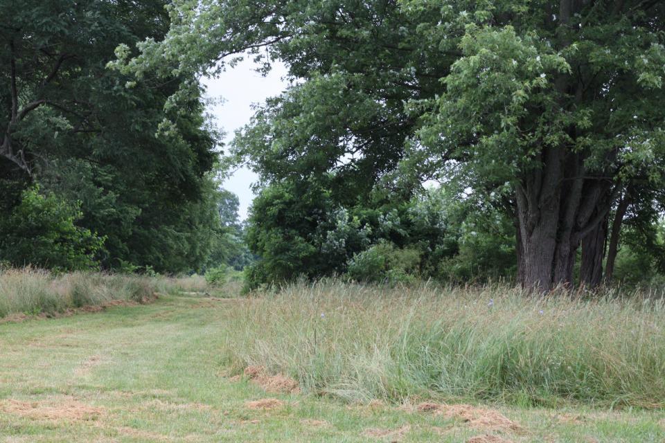urban forest initiative tree week 2021 wild ones hisle park