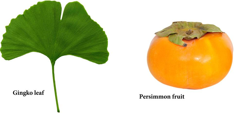 Gingko leaf and persimmon fruit (Creative Commons)