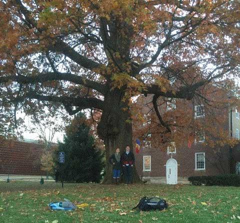 The favorite pin oak of Julianna Dantzer & Isaac Hines-Williams in November 2015