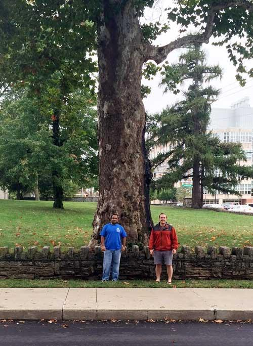 The favorite American Sycamore of Pradeep Kaza and Jeff Buckles in September 2015