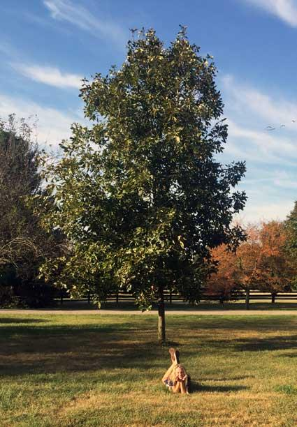 The favorite Pignut Hickory of James in Summer 2015