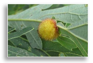 UKnTrees---hedgehog