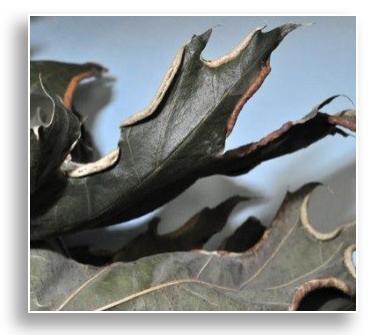 UKnTrees---marginal-fold