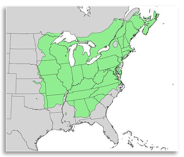 Range of northern red oak (USGS Public Domain)