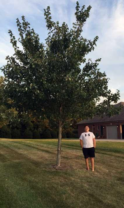 The favorite Dogwood of Rory in Summer 2015