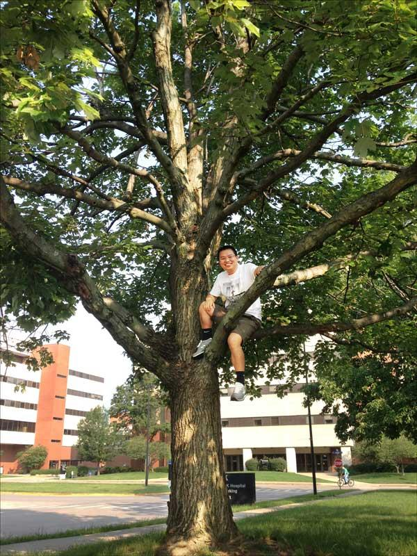 Zhijie sitting in his favorite red maple on University of Kentucky campus, July 2015 (Z. Yang)