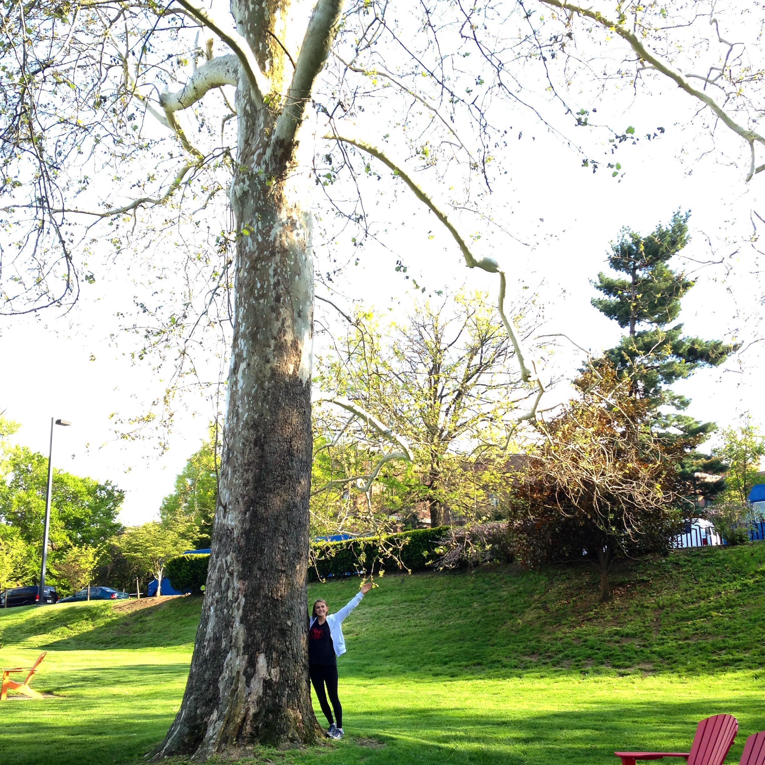 Maya and her favorite American sycamore on UK campus (April 2015)