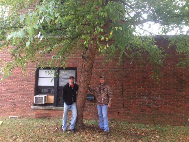 The favorite river birch of Zack and Garrett on University of Kentucky Campus in September 2016