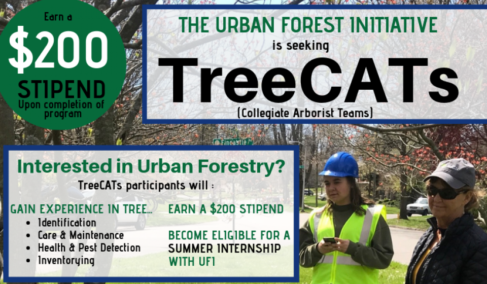 Urban Forest Initiative, UFI, TreeCATs, Collegiate Arborist Teams, Internship